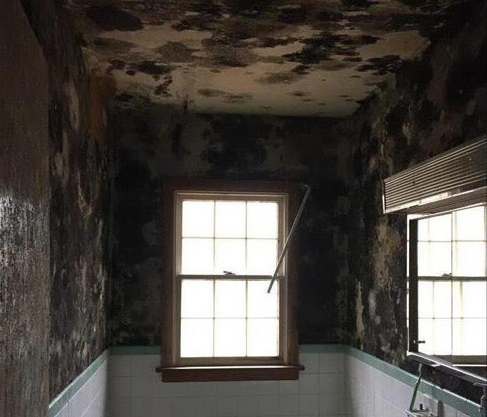 Mold Remediation When Does Insurance Cover Mold Remediation?